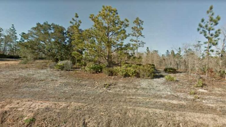 0.32 acres Lot in Interlachen,FL. APN# 04-10-24-4940-0110-0290 Street view of the property